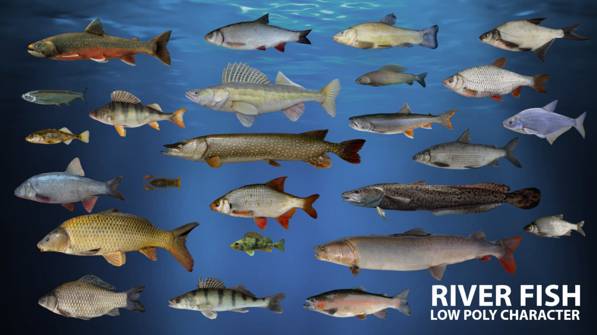 river fish lowpoly 3d model fbx 306655