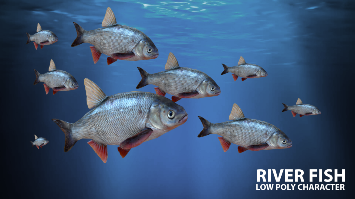 river fish lowpoly 3d model fbx 306657