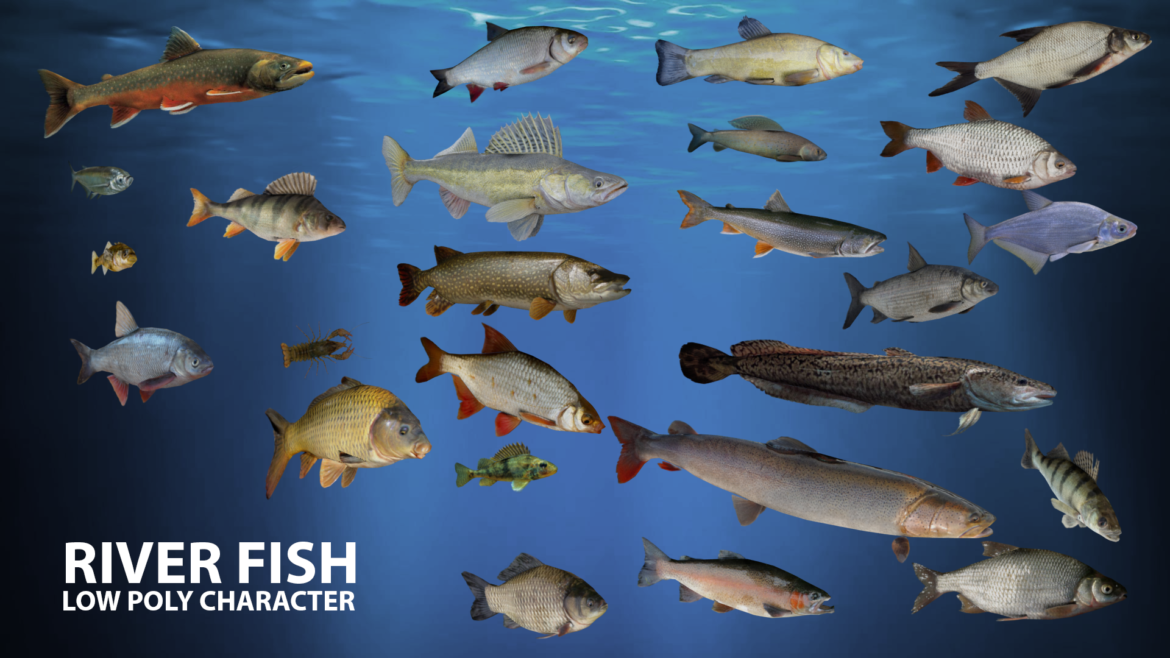 river fish lowpoly 3d model fbx 306659