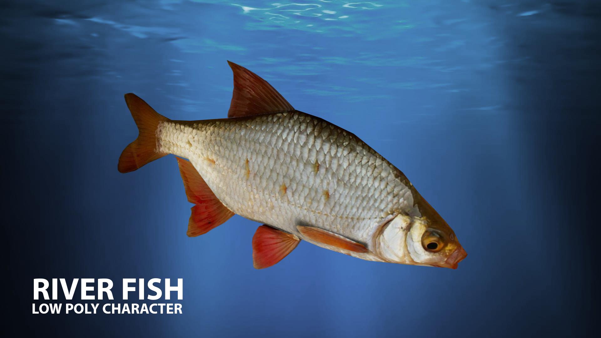 River fish Low-poly 3D model