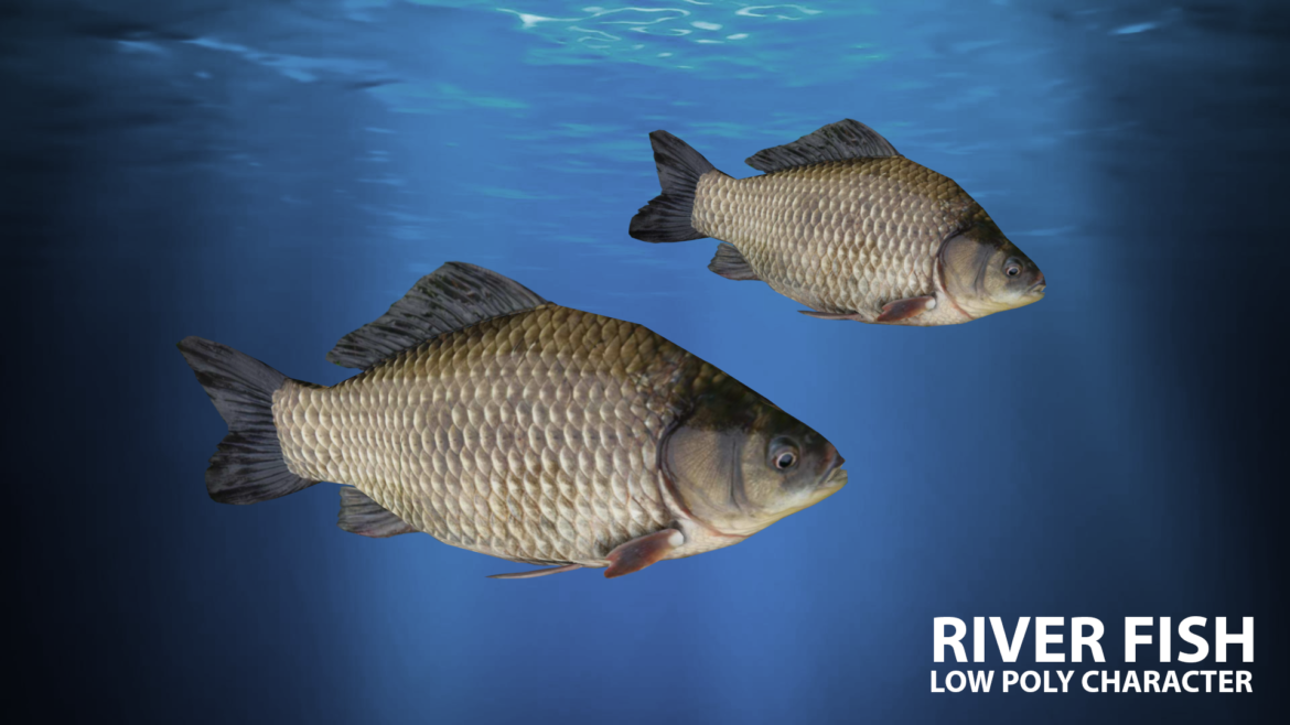 river fish lowpoly 3d model fbx 306662