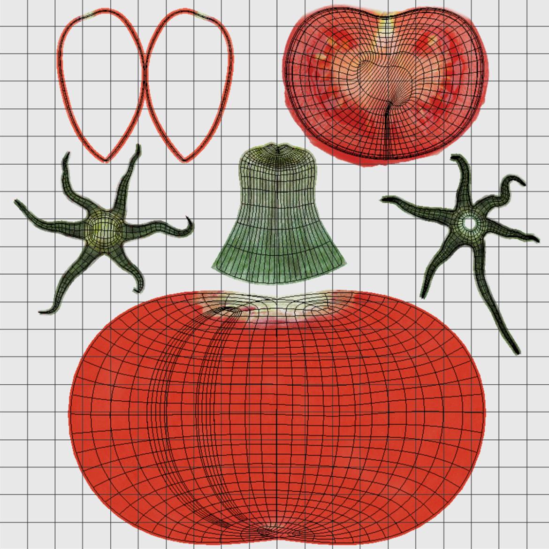 tomato 3d model max lwo obj 320410
