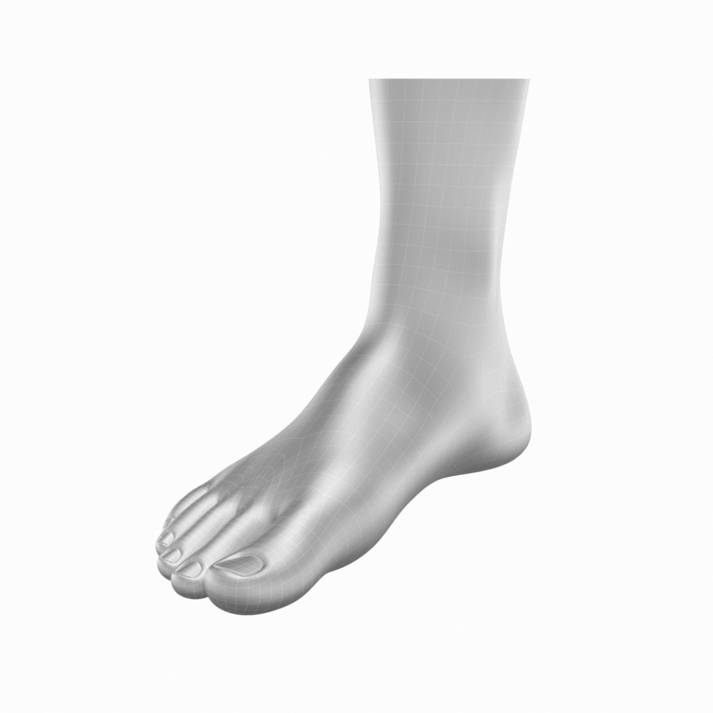 human feet in standing position base mesh 3d model 3ds max dxf dwg fbx blend c4d dae ma mb  obj ztl 320884