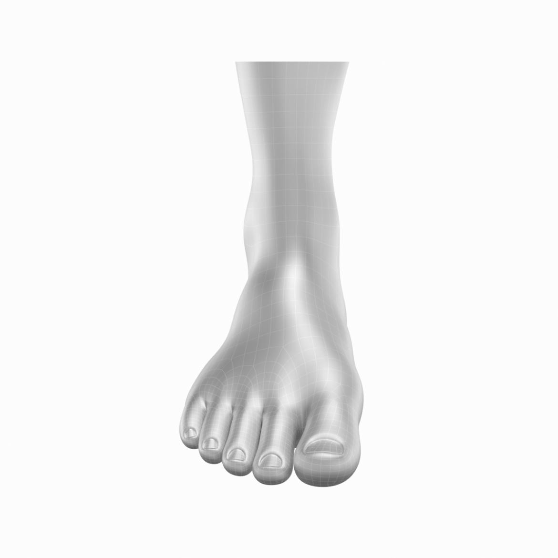 human feet in standing position base mesh 3d model 3ds max dxf dwg fbx blend c4d dae ma mb  obj ztl 320886