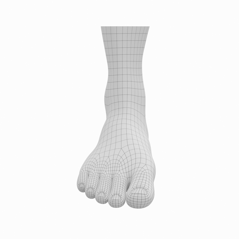human feet in standing position base mesh 3d model 3ds max dxf dwg fbx blend c4d dae ma mb  obj ztl 320887