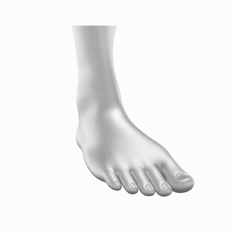 human feet in standing position base mesh 3d model 3ds max dxf dwg fbx blend c4d dae ma mb  obj ztl 320888