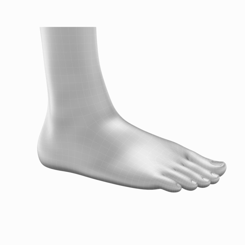 human feet in standing position base mesh 3d model 3ds max dxf dwg fbx blend c4d dae ma mb  obj ztl 320890
