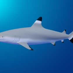 blacktip reef shark 3d μοντέλο max fbx c4d lxo ma mb obj 322298