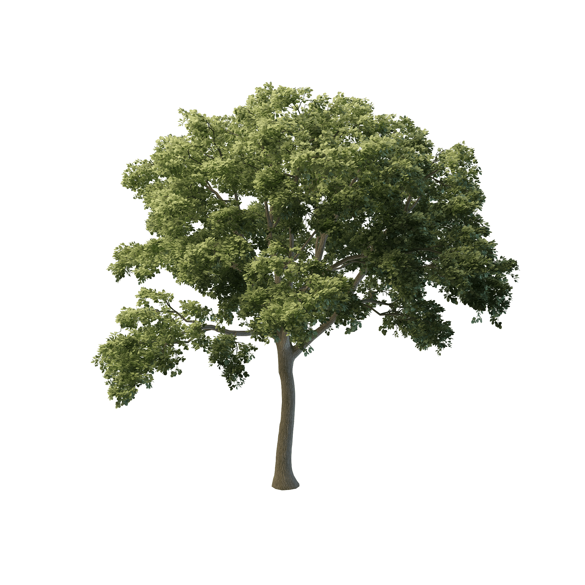 custom 3d modeling of his res tree