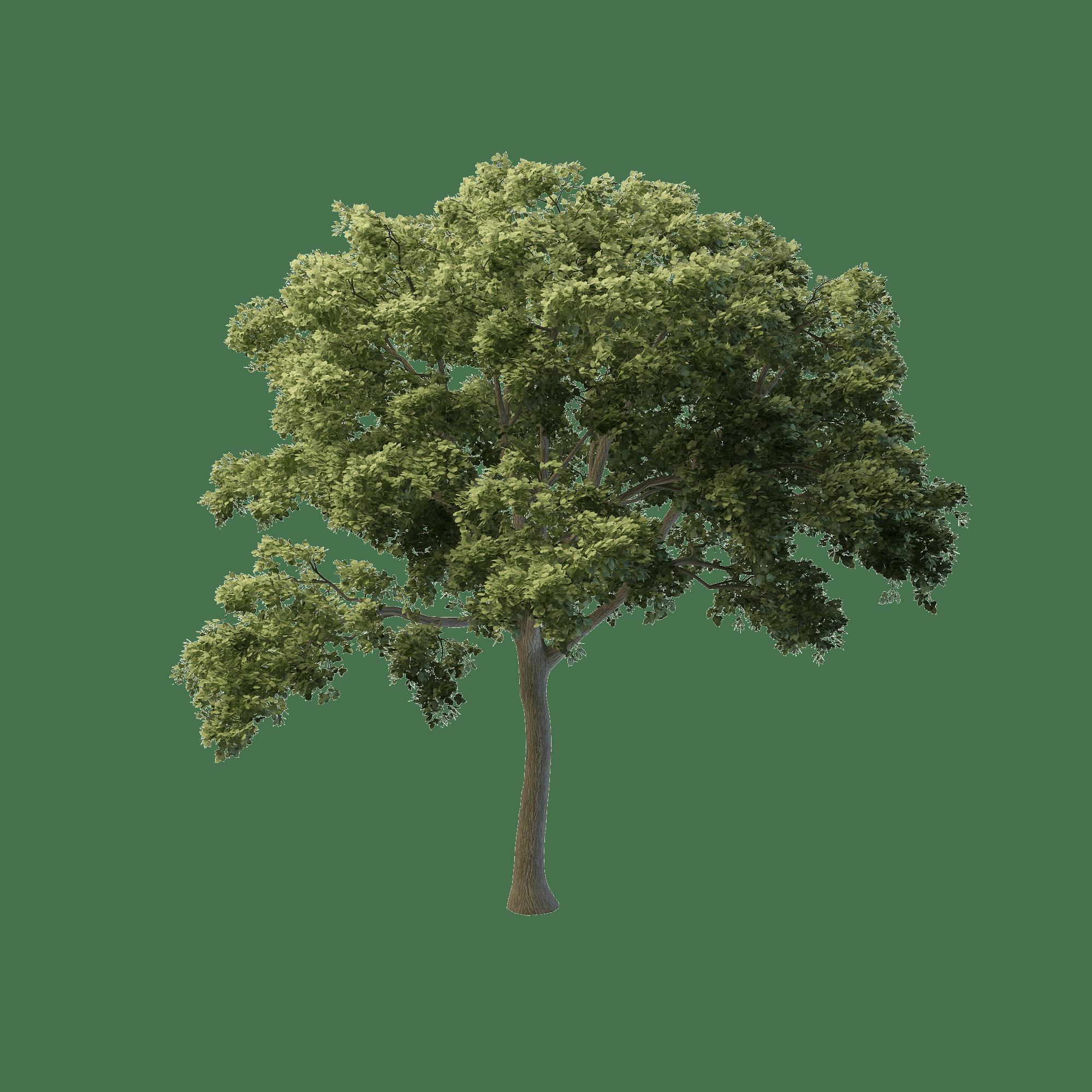pemodelan 3d kustom pohon resnya