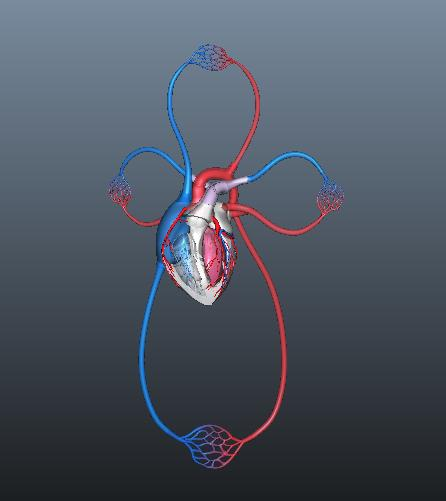 human blood circulation of heart 3d model ma mb 128917