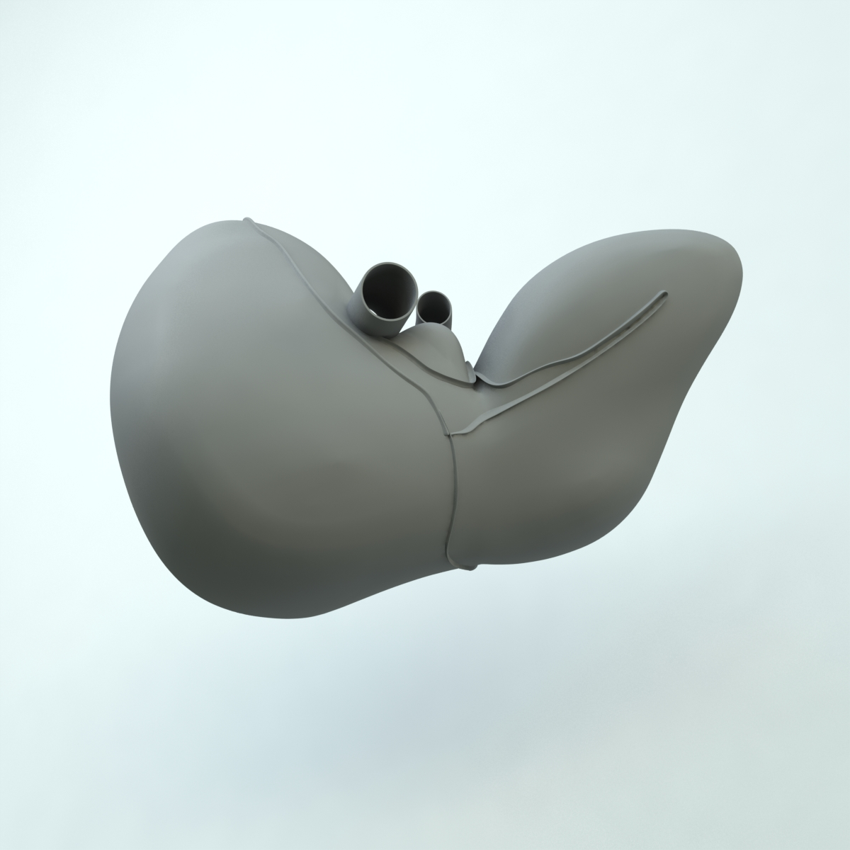 liver 3d model max 155466