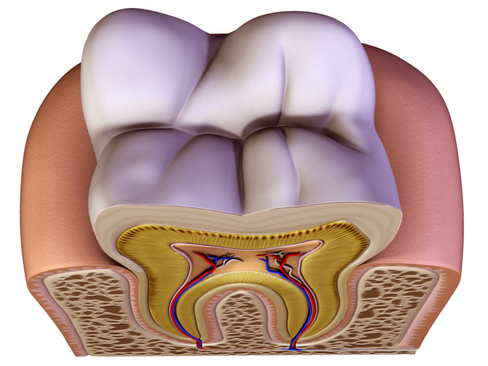 Tooth ( 166.06KB jpg by Behr_Bros. )