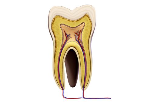 Tooth ( 68.15KB jpg by Behr_Bros. )