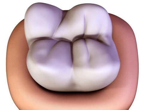 Tooth ( 131.7KB jpg by Behr_Bros. )