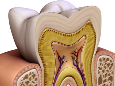 Tooth ( 129.38KB jpg by Behr_Bros. )