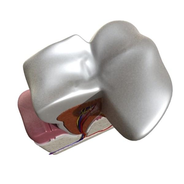 diş diş plakası yüksək ətraflı 3d modeli 3ds max fbx obj 130064