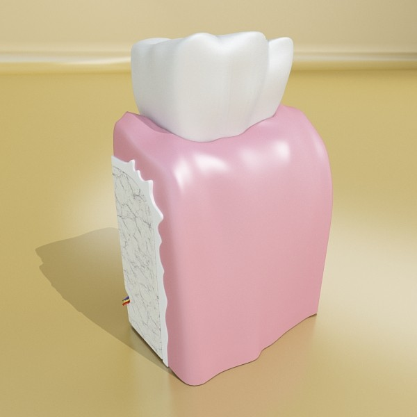 tooth high detail 3d model 3ds max fbx obj 130050