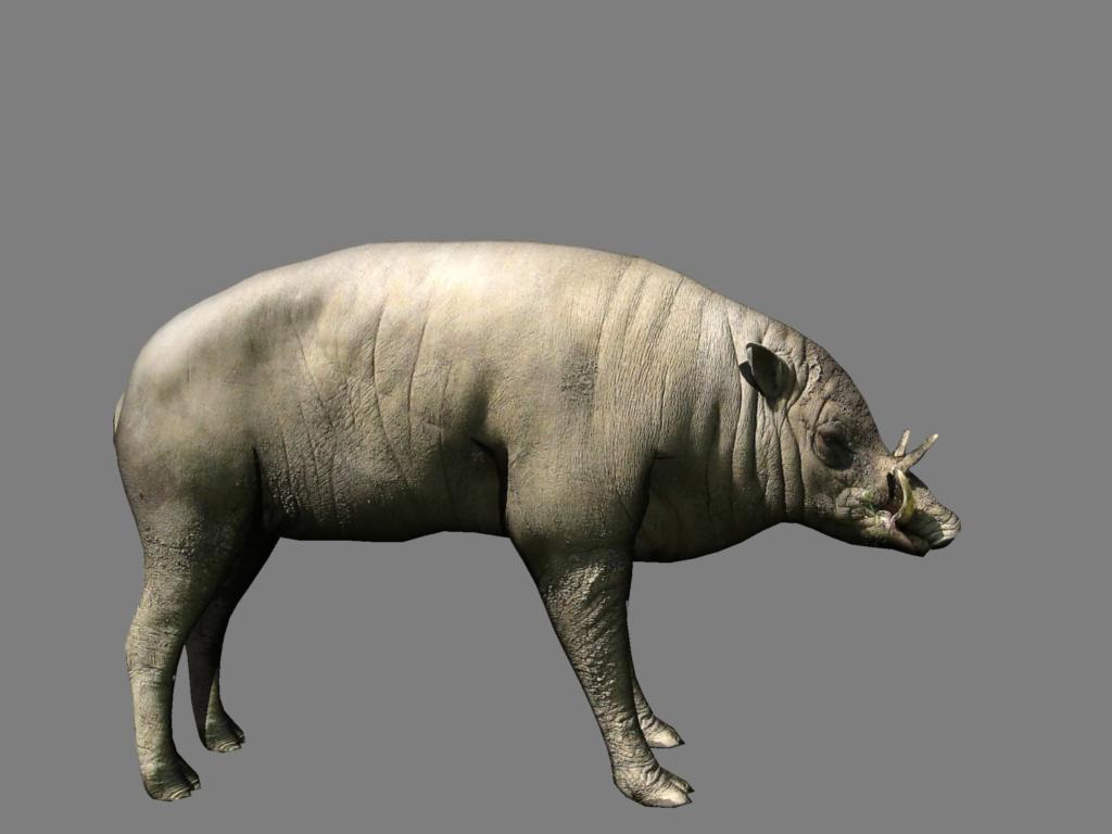babirusa 3d model 3ds dxf dae obj 132380