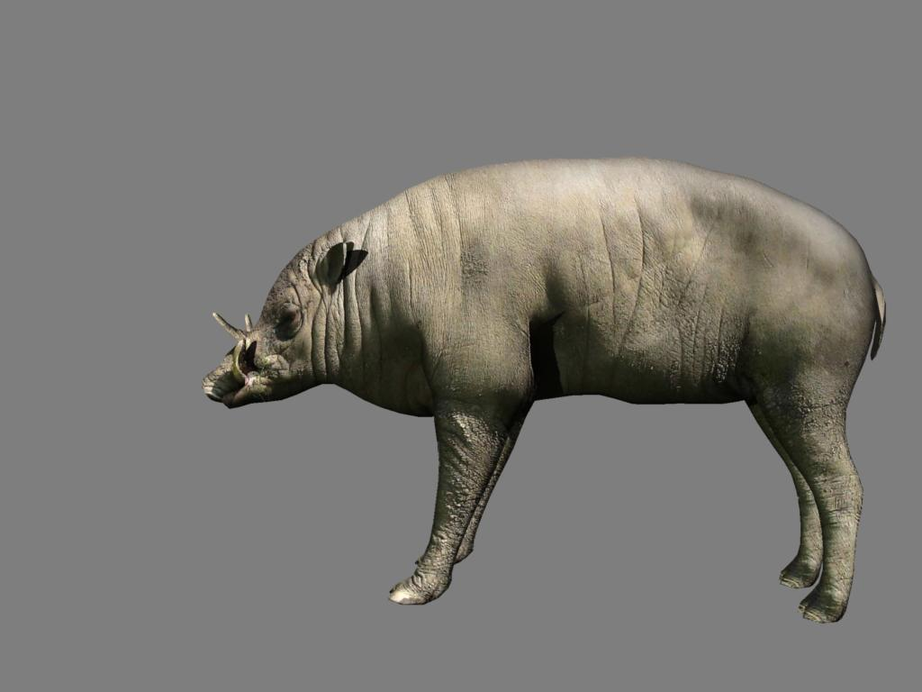 babirusa 3d model 3ds dxf dae obj 132381