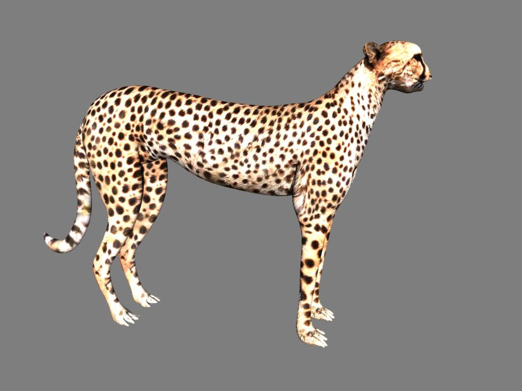 cheetah 3d model obj 132625