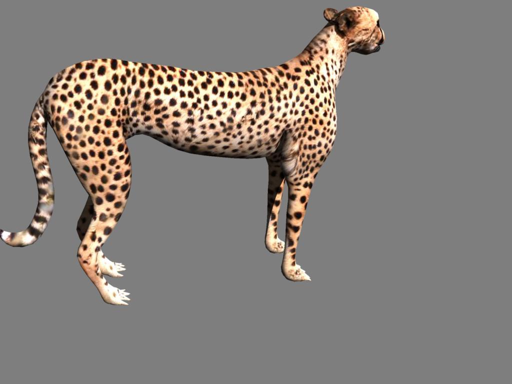 cheetah 3d model obj 132626