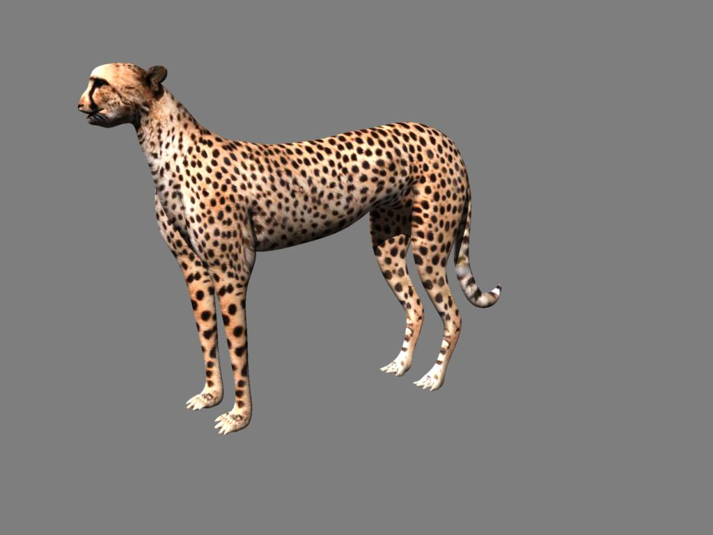 cheetah 3d model obj 132629