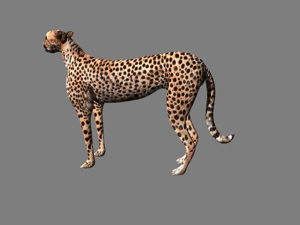 cheetah 3d model obj 132630