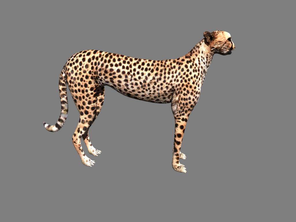 cheetah 3d model obj 132631