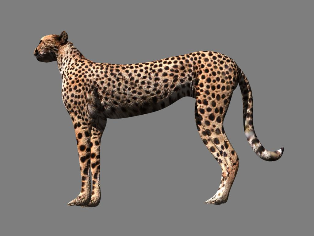 cheetah 3d model obj 132632
