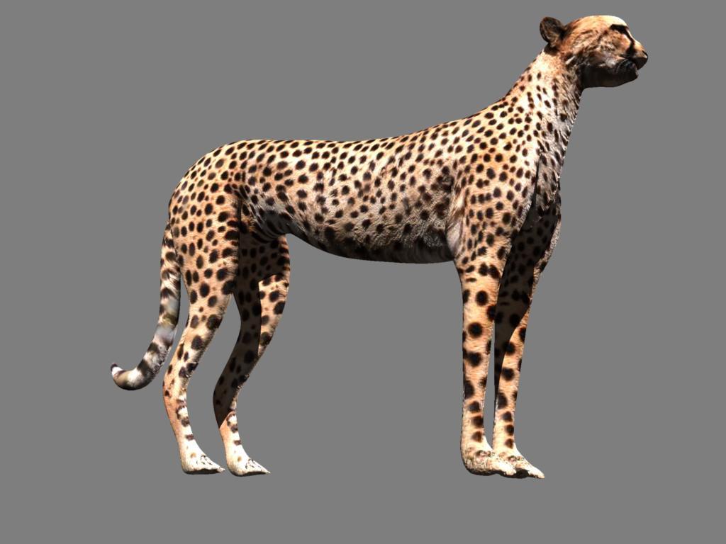 cheetah 3d model obj 132633