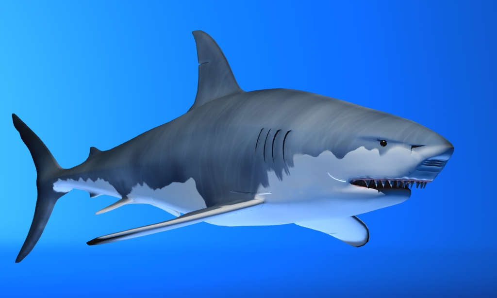 great white shark 3d model max fbx 150301