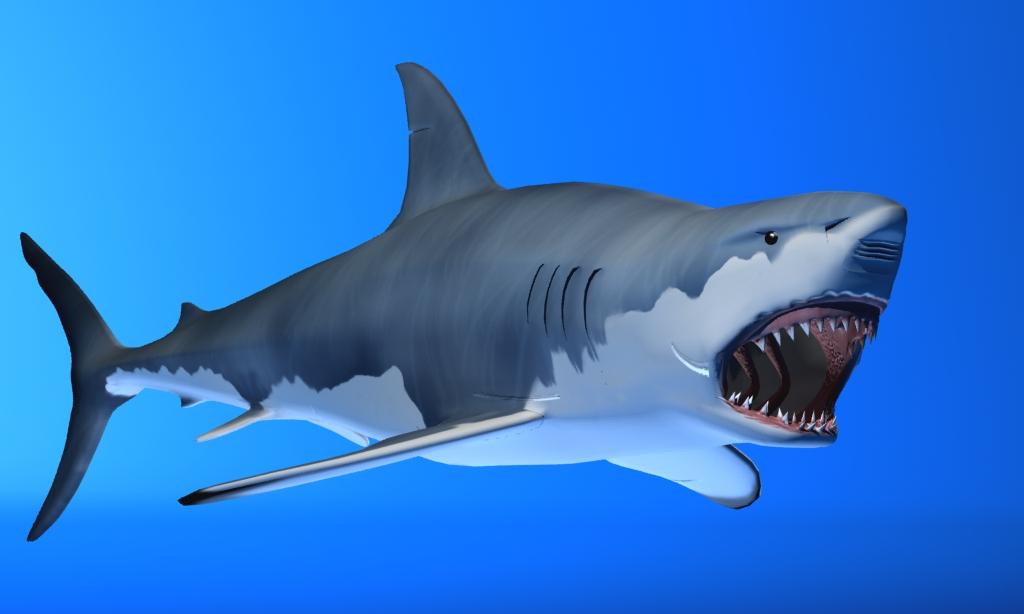 great white shark 3d model max fbx 150302