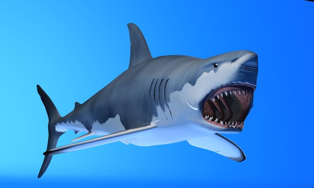 great white shark 3d model max fbx 150303