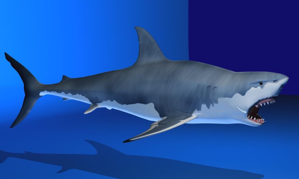 great white shark 3d model max fbx 150304