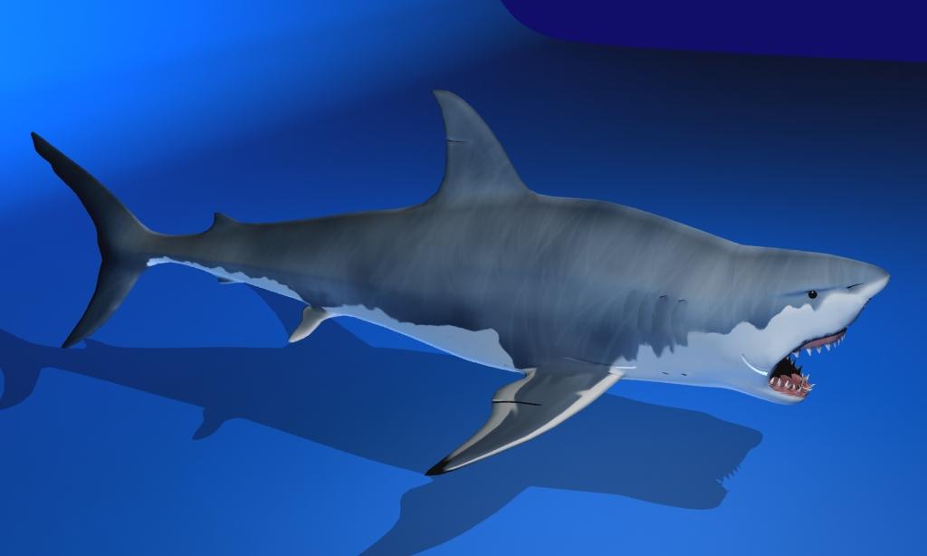 great white shark 3d model max fbx 150305