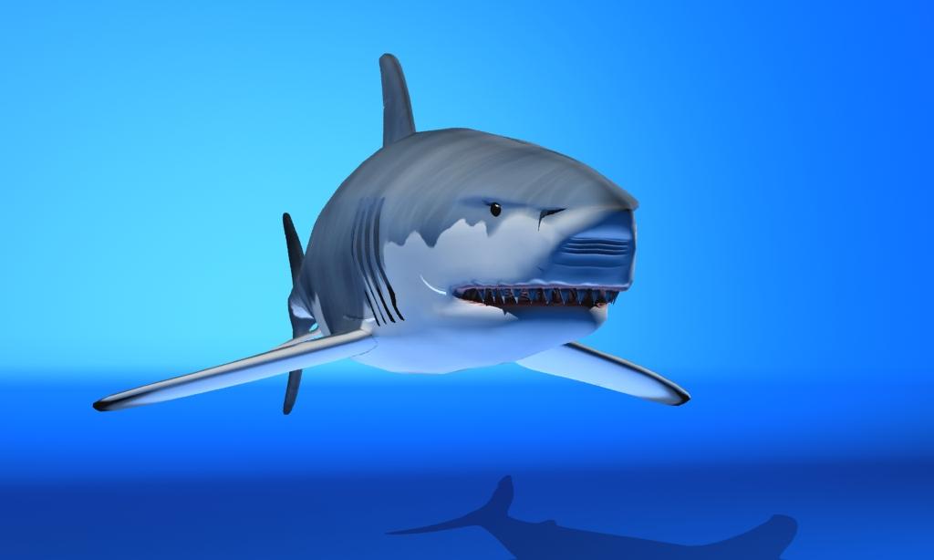 great white shark 3d model max fbx 150306