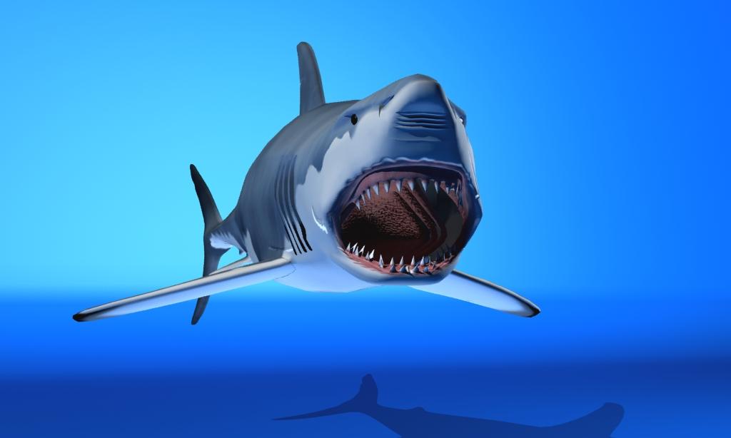 great white shark 3d model max fbx 150307