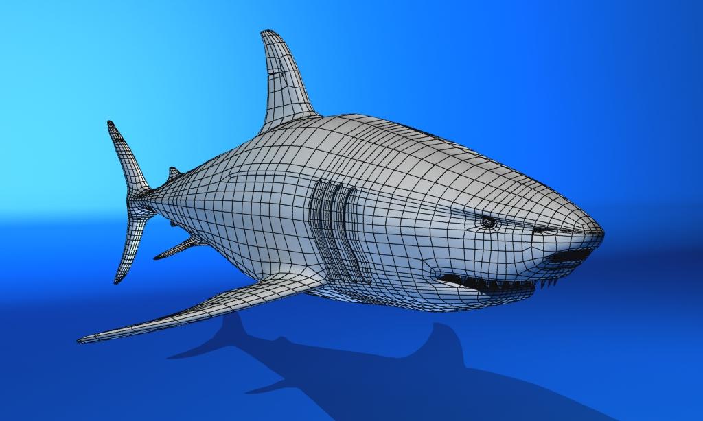 great white shark 3d model max fbx 150308