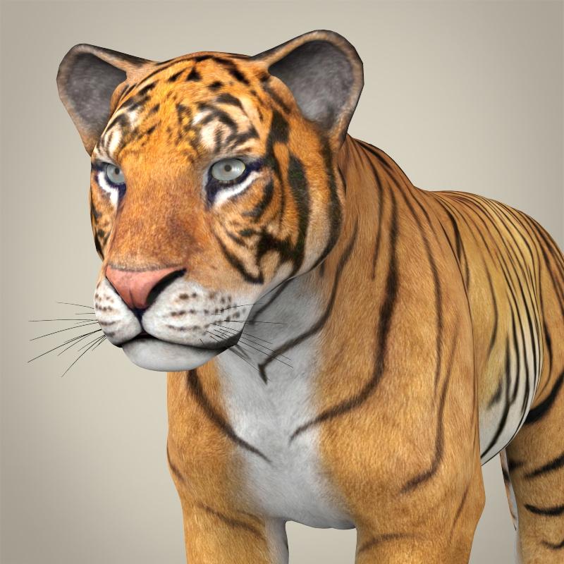 realistic bengal tiger 3d model 3ds max fbx c4d lwo ma mb obj 161320