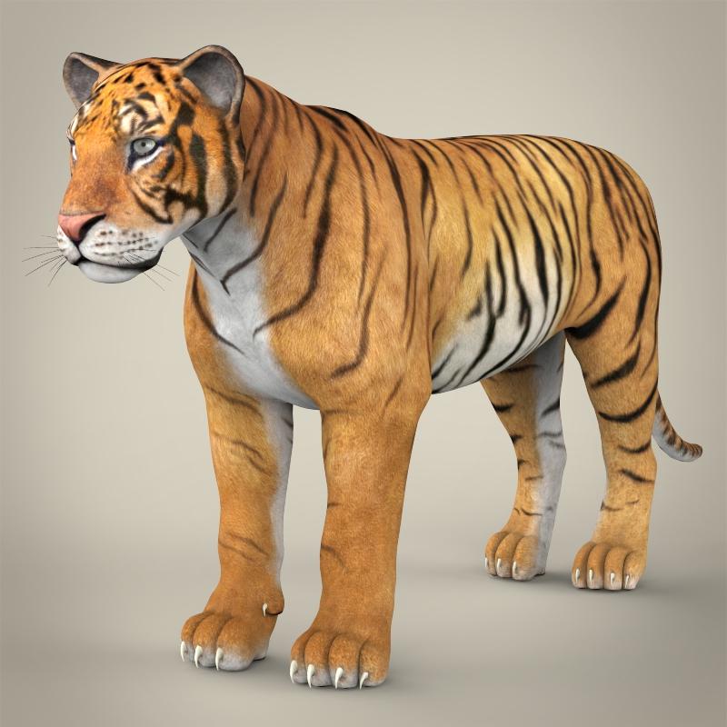 reāls bengālijas tīģeris 3d modelis 3ds max fbx c4d lwo ma mb obj 161321