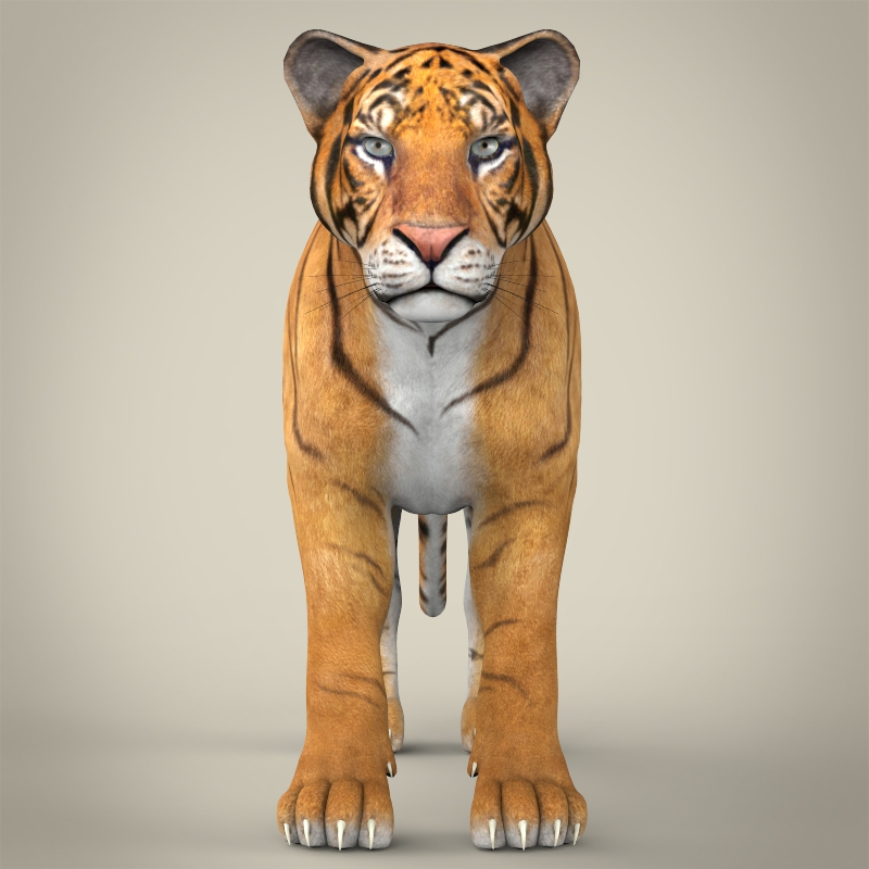 reāls bengālijas tīģeris 3d modelis 3ds max fbx c4d lwo ma mb obj 161322