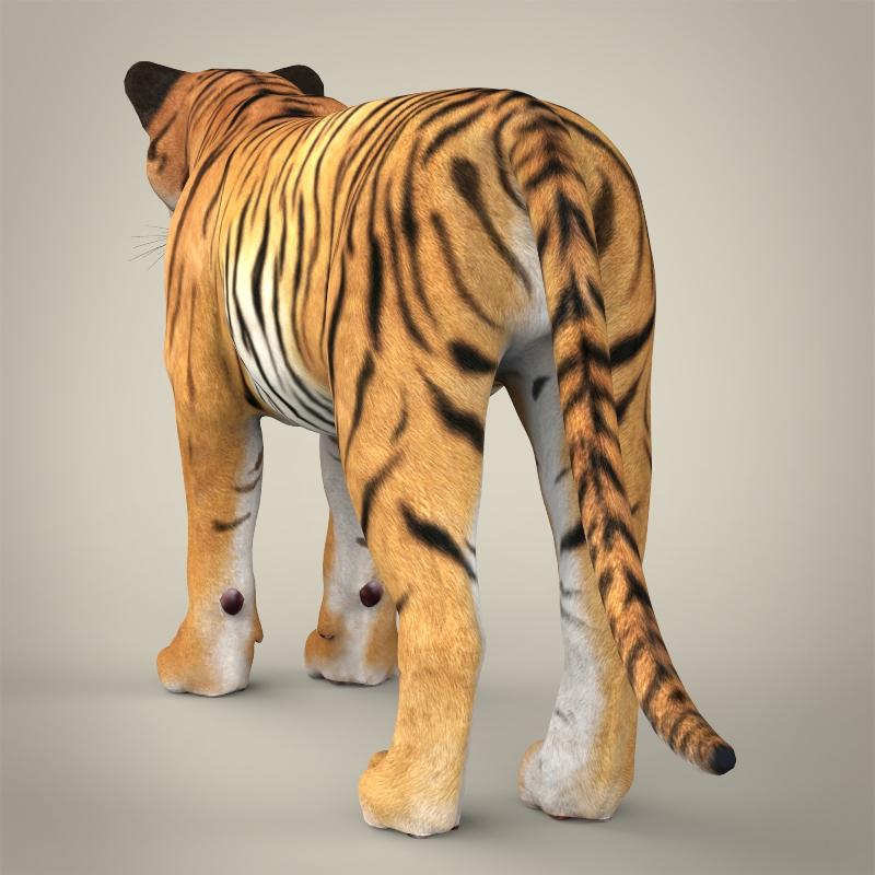 reāls bengālijas tīģeris 3d modelis 3ds max fbx c4d lwo ma mb obj 161324