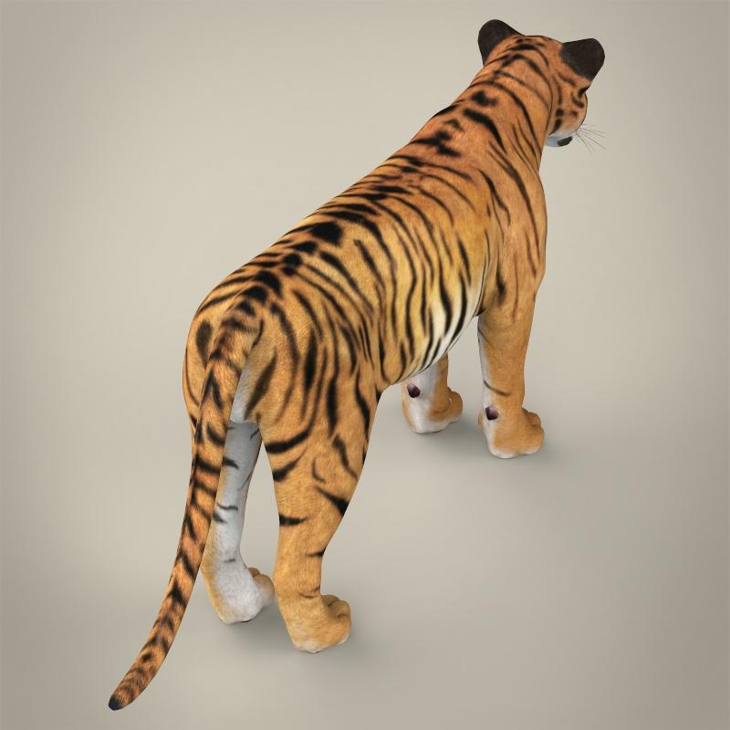reāls bengālijas tīģeris 3d modelis 3ds max fbx c4d lwo ma mb obj 161325
