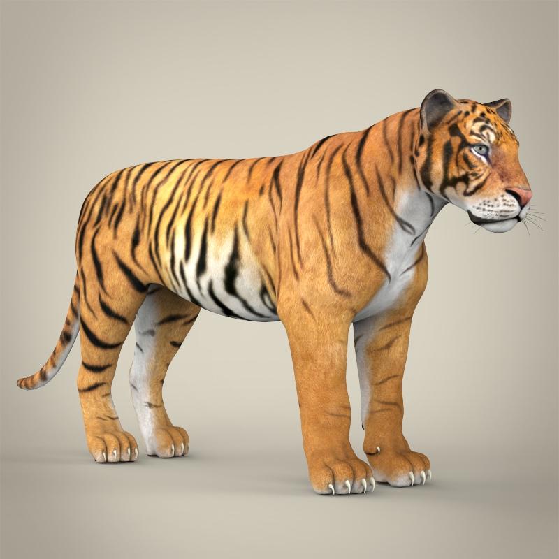 reāls bengālijas tīģeris 3d modelis 3ds max fbx c4d lwo ma mb obj 161326