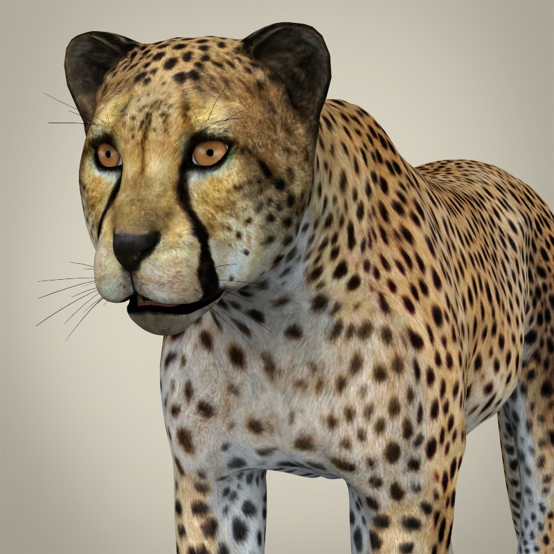 realni cheetah 3d model 3ds max fbx c4d lwo ma mb obj 161762