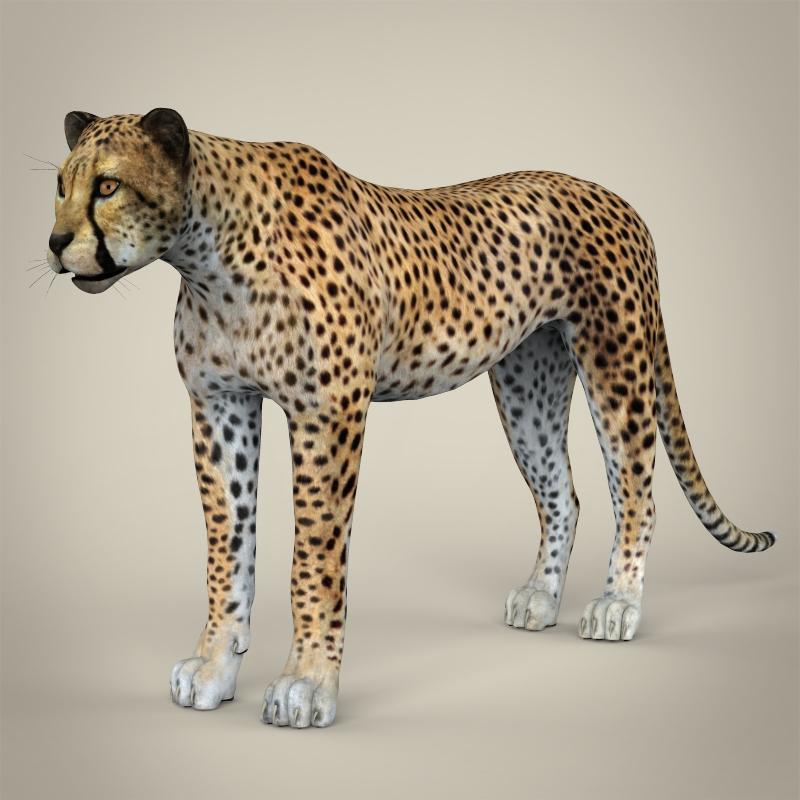 reāls cheetah 3d modelis 3ds max fbx c4d lwo ma mb obj 161763