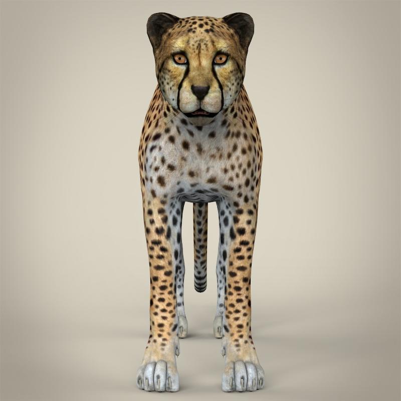 reāls cheetah 3d modelis 3ds max fbx c4d lwo ma mb obj 161764
