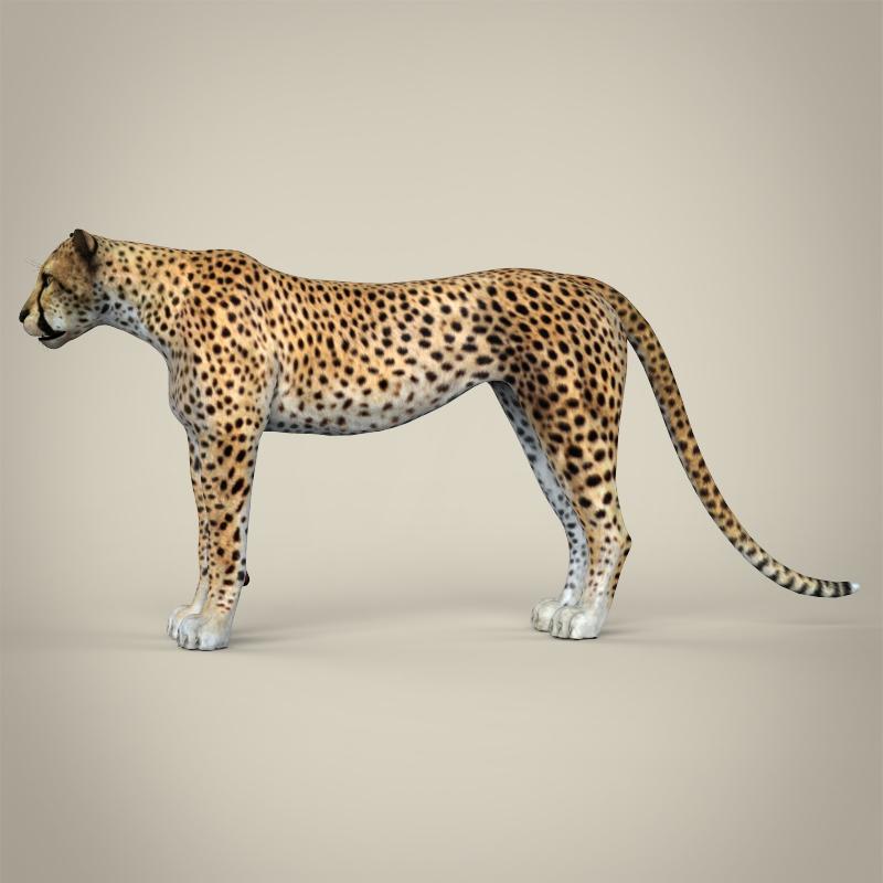 reāls cheetah 3d modelis 3ds max fbx c4d lwo ma mb obj 161765