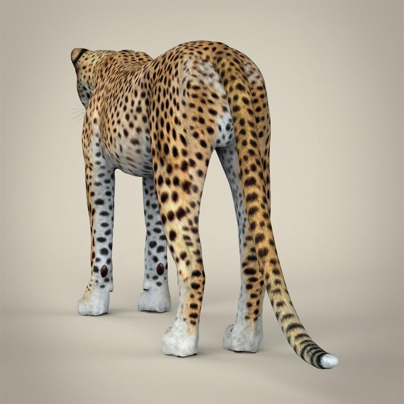 reāls cheetah 3d modelis 3ds max fbx c4d lwo ma mb obj 161766